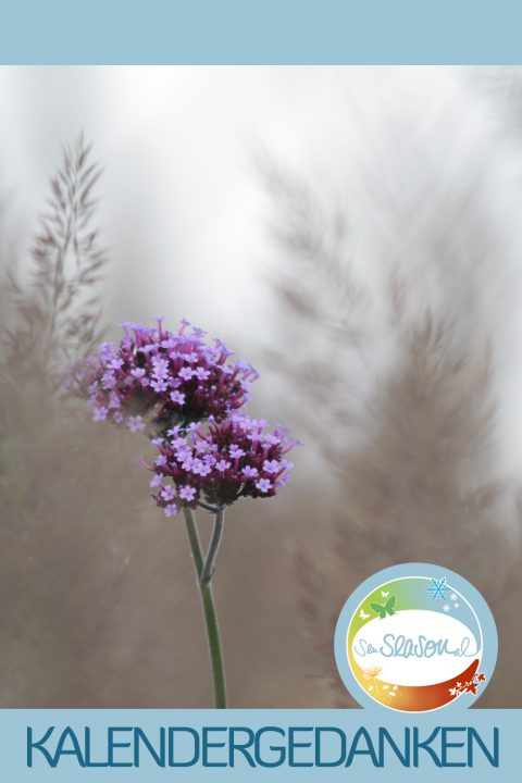 Kalendergedanken - Kalenderblätter nachgereicht: Lila Blume, Monat September 2016