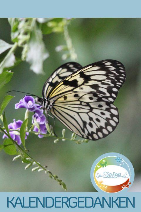 Kalendergedanken - Kalenderblätter nachgereicht: Schmetterling, Monat Juli 2016
