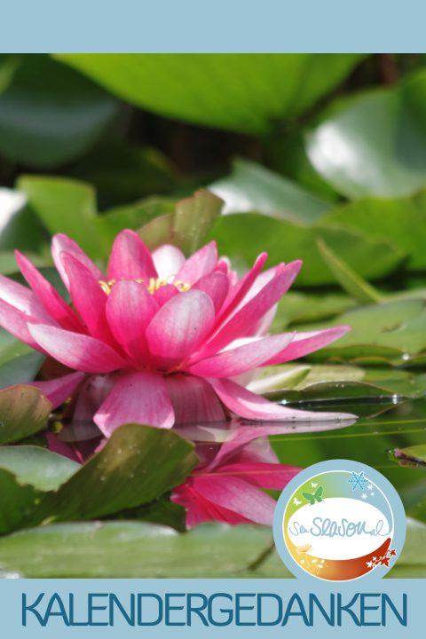 Kalendergedanken - Kalenderblätter nachgereicht: Seerose, Monat Juni 2016