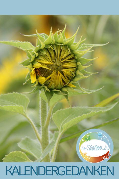 Kalendergedanken - Kalenderblätter nachgereicht: Sonnenblume, Monat August 2016